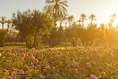 activites_Le_Pullman_Marrakech_Palmeraie_Resort_& Spa6