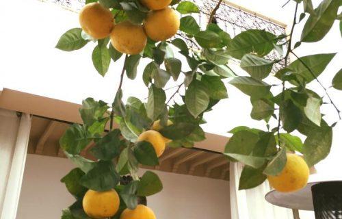 Riad_Les_Orangers_D'alilia_marrakech10
