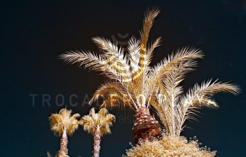 Restaurant_Trocadero_Playa _casablanca21