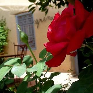 chambres_dar_zitoune_taroudant6