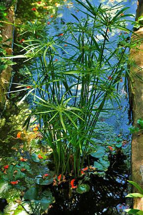 Les jardins exotiques de sal rabat - Jardin exotique sale nice ...