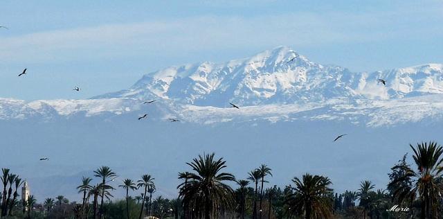 Les Montagnes De L U2019atlas Marrakech