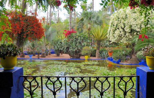 visite_Jardin_Majorelle_marrakech4