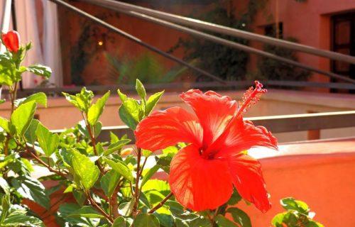 maison_dhotes_riad_al_badia_marrakech18