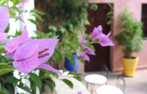 maison_dhotes_riad_al_badia_marrakech19